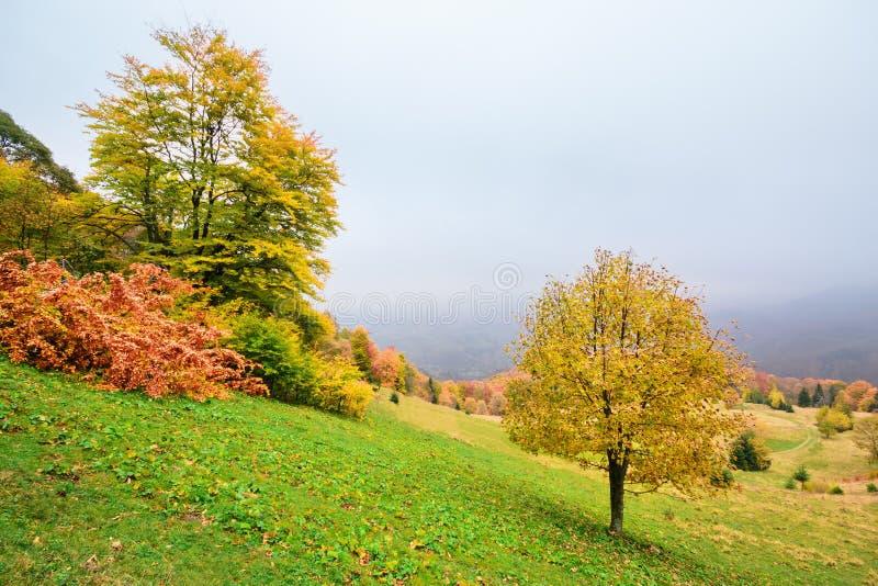 Γραφικό τοπίο φθινοπώρου στα βουνά με το λιβάδι και τα ζωηρόχρωμα δέντρα στο πρώτο πλάνο και την ομίχλη επάνω από την κοιλάδα στοκ εικόνες με δικαίωμα ελεύθερης χρήσης