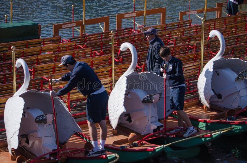 Γυαλίζοντας βάρκες του Κύκνου στο δημόσιο κήπο της Βοστώνης στοκ φωτογραφία