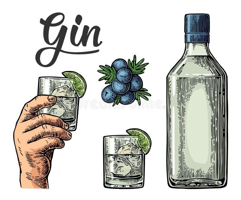 Γυαλί και μπουκάλι του τζιν και κλάδος του ιουνιπέρου με τα μούρα ελεύθερη απεικόνιση δικαιώματος
