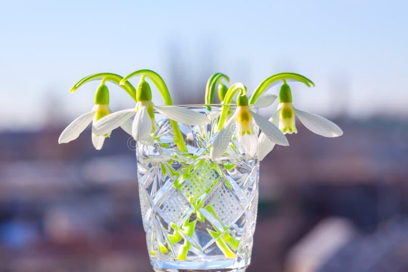 γυαλί κρυστάλλου snowdrops στοκ φωτογραφίες