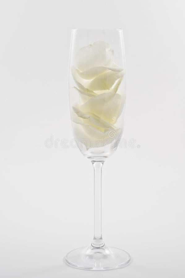 Γυαλί CHAMPAGNE με τα άσπρα ροδαλά πέταλα στοκ εικόνα με δικαίωμα ελεύθερης χρήσης