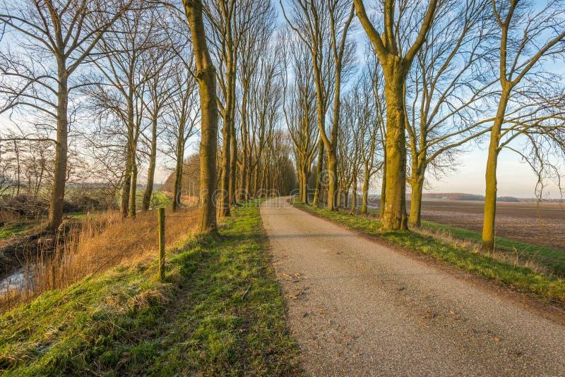 Γυμνά δέντρα και στις δύο πλευρές μιας εθνικής οδού στοκ εικόνες με δικαίωμα ελεύθερης χρήσης