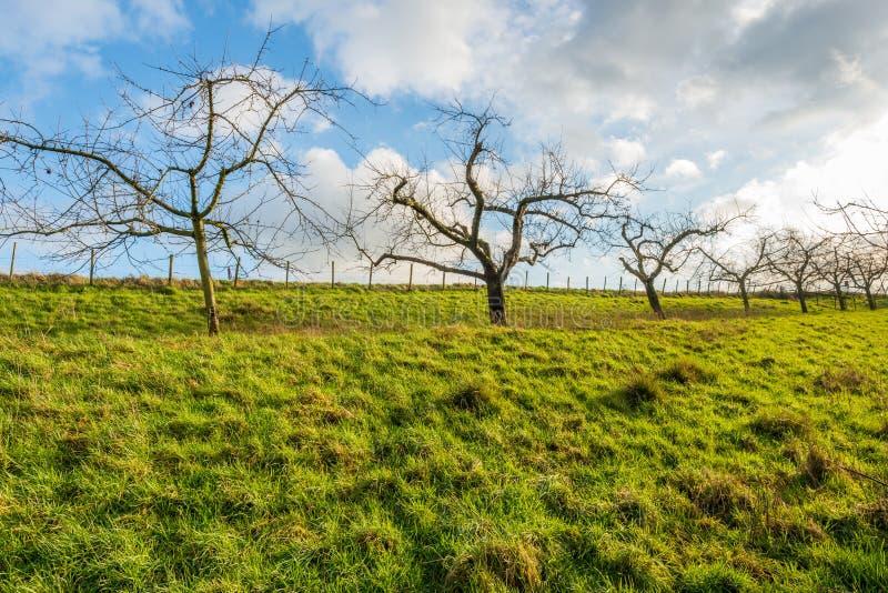 Γυμνά δέντρα μηλιάς ενάντια σε έναν νεφελώδη ουρανό στοκ φωτογραφία με δικαίωμα ελεύθερης χρήσης