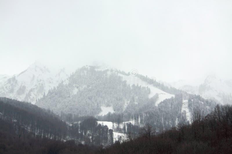 Γυμνά δέντρα στα βουνά Καύκασου στοκ εικόνες