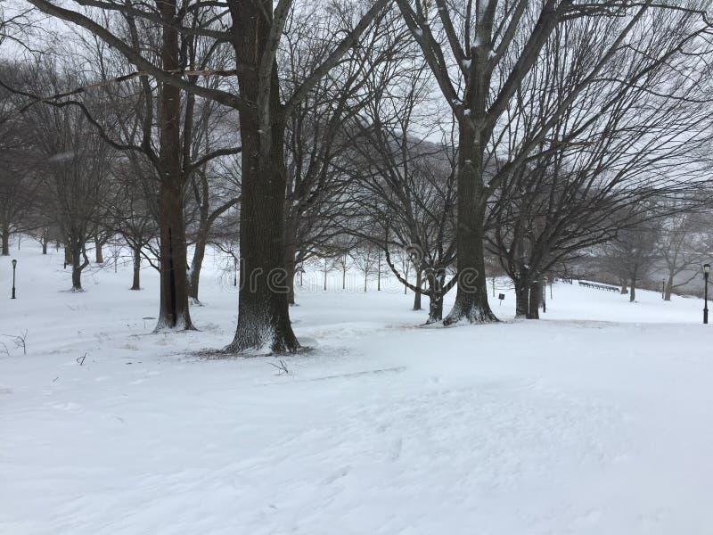 Γυμνά δέντρα στο χιονώδη τομέα στοκ φωτογραφία με δικαίωμα ελεύθερης χρήσης