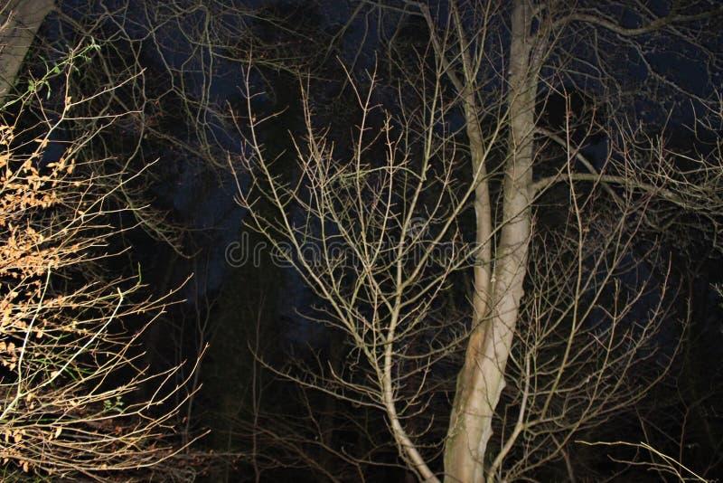 γυμνά δέντρα στοκ φωτογραφία