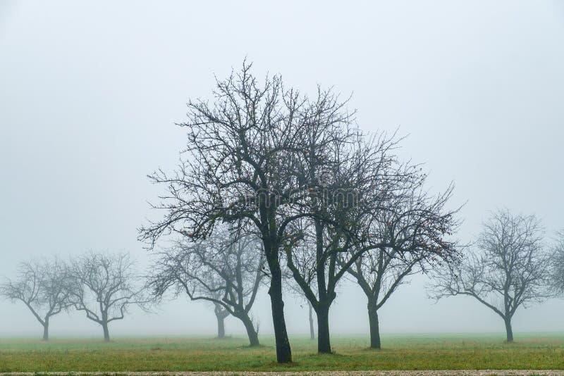 Γυμνά δέντρα μηλιάς το φθινόπωρο στοκ εικόνες