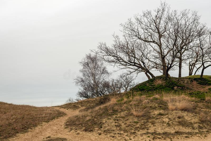 Γυμνά δέντρα στην κορυφή ενός αμμόλοφου στοκ εικόνες με δικαίωμα ελεύθερης χρήσης