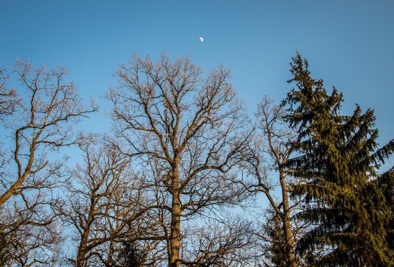 Γυμνοί δέντρα και μπλε ουρανός στοκ φωτογραφίες