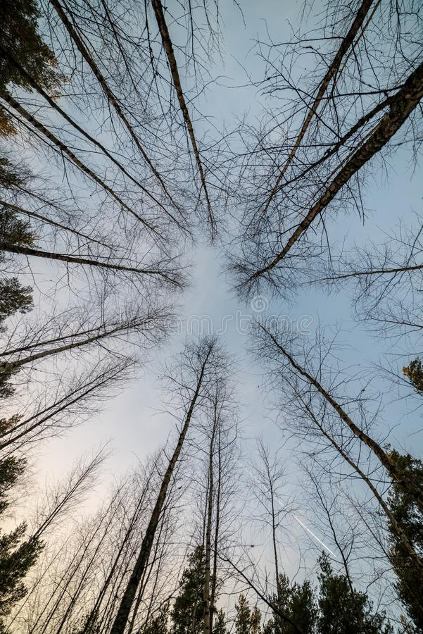 γυμνοί κλάδοι δέντρων στα τέλη του φθινοπώρου χωρίς τα φύλλα στοκ φωτογραφίες