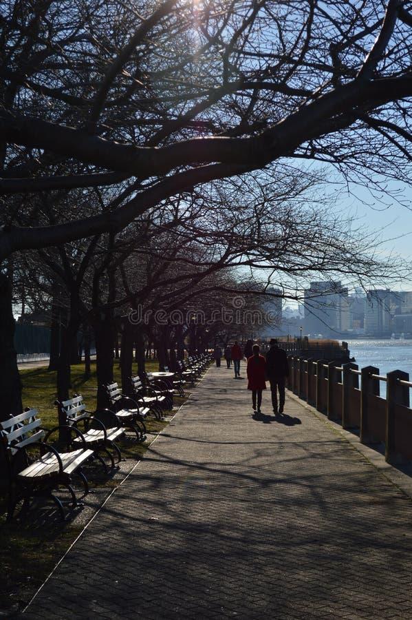 Γυμνοί κλάδοι των δέντρων στην ηλιόλουστη ημέρα στον ποταμό Greenway του Hudson στοκ φωτογραφία