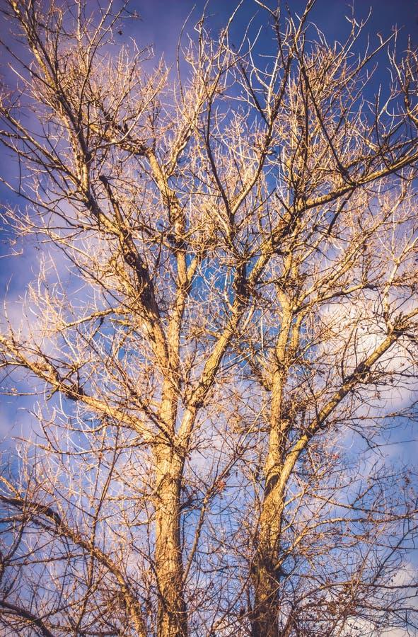 γυμνό δέντρο στοκ φωτογραφία