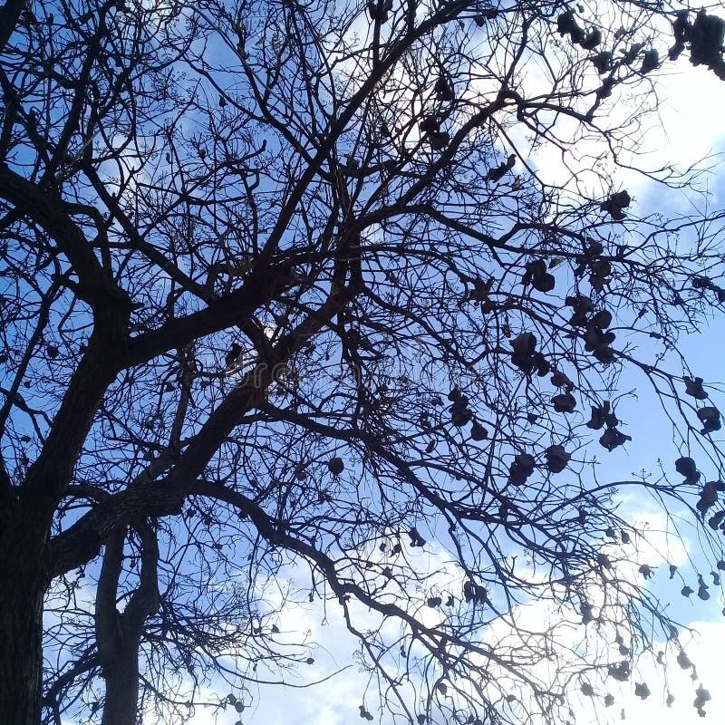 Γυμνό δέντρο με μαύρο ηλέκτρινο κάτω από το σαφή μπλε ουρανό στοκ εικόνα