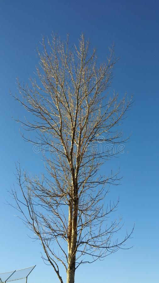 Γυμνό δέντρο στο βαθύ μπλε ουρανό στοκ φωτογραφία με δικαίωμα ελεύθερης χρήσης
