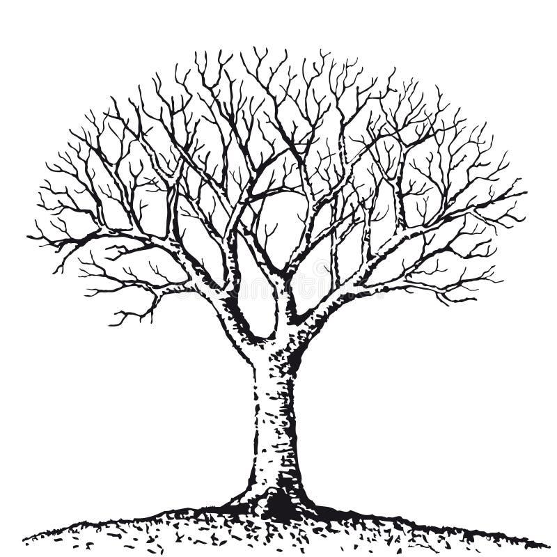 γυμνό διάνυσμα δέντρων διανυσματική απεικόνιση