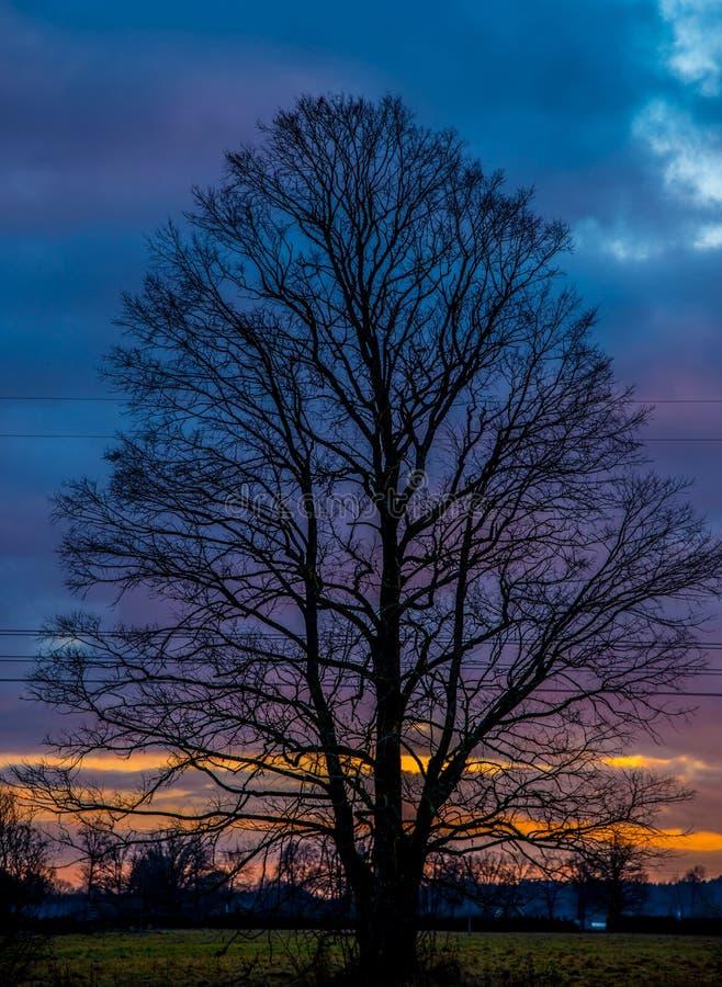 γυμνό δρύινο δέντρο στοκ εικόνες με δικαίωμα ελεύθερης χρήσης