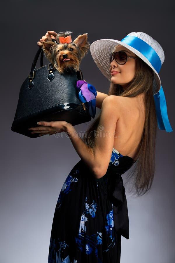 γυναίκα Γιορκσάιρ τεριέ glamor στοκ εικόνες