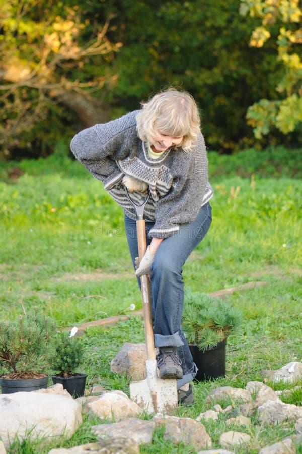 γυναίκα δέντρων φυτών στοκ εικόνες