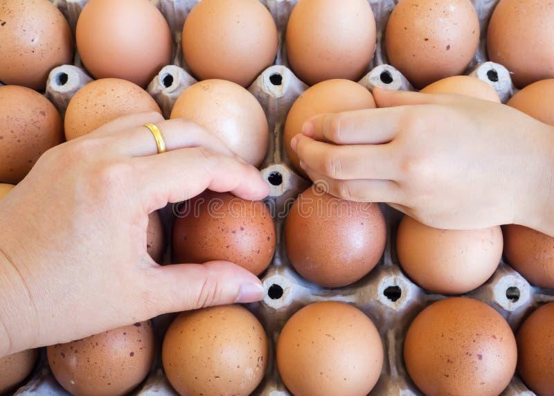 Γυναίκα και κορίτσι που μαζεύουν με το χέρι το αυγό από το δίσκο αυγών Έννοια των τροφίμων ι στοκ εικόνα