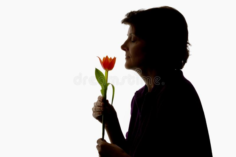 Γυναίκα και τουλίπα σκιαγραφιών στοκ εικόνα με δικαίωμα ελεύθερης χρήσης