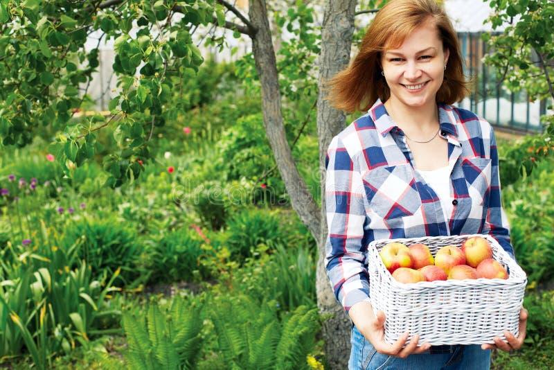 Γυναίκα με ένα καλάθι των μήλων στον κήπο στοκ φωτογραφία