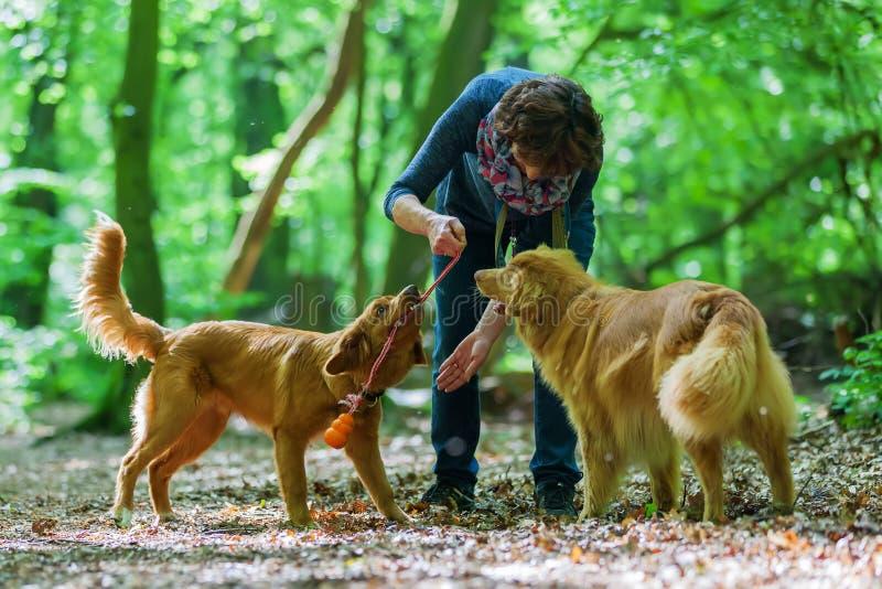 Γυναίκα με τα σκυλιά της στο δάσος στοκ εικόνες