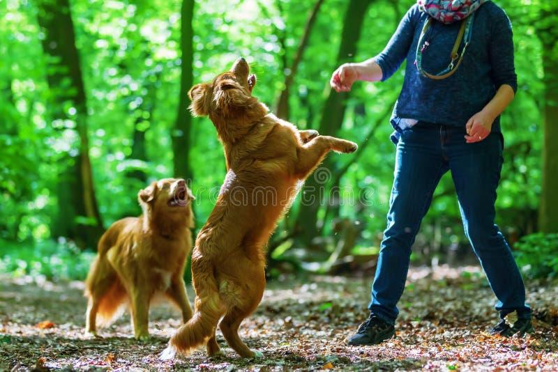 Γυναίκα με τα σκυλιά της στο δάσος στοκ φωτογραφία με δικαίωμα ελεύθερης χρήσης