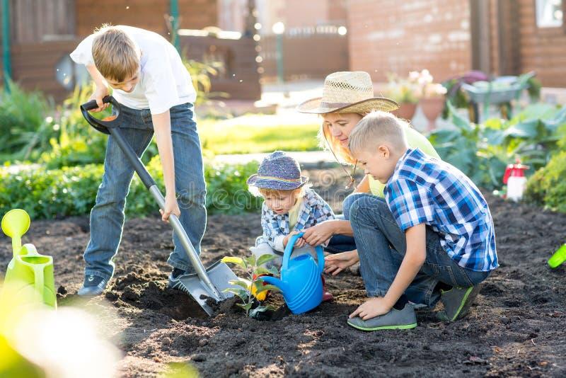 Γυναίκα με τρεις γιους παιδιών που φυτεύουν ένα δέντρο και που ποτίζουν το μαζί στον κήπο στοκ φωτογραφία με δικαίωμα ελεύθερης χρήσης