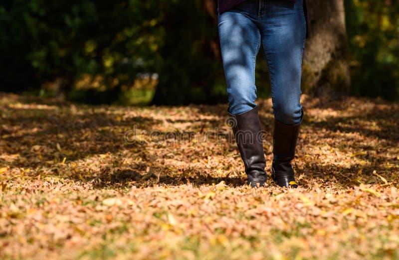 Γυναίκα που απολαμβάνει τα φύλλα πτώσης στοκ εικόνα