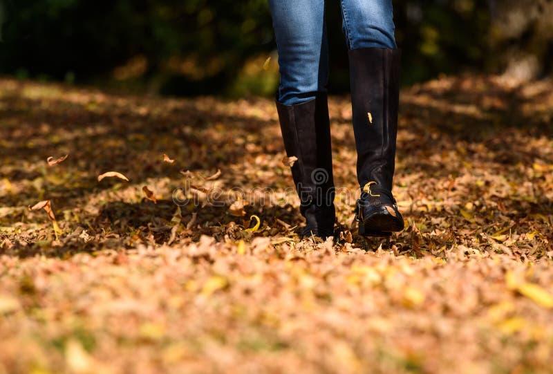 Γυναίκα που απολαμβάνει τα φύλλα πτώσης στοκ φωτογραφίες με δικαίωμα ελεύθερης χρήσης