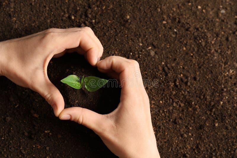 Γυναίκα που κάνει την καρδιά με τα χέρια της και το νέο σπορόφυτο στο χώμα, τοπ άποψη στοκ φωτογραφία