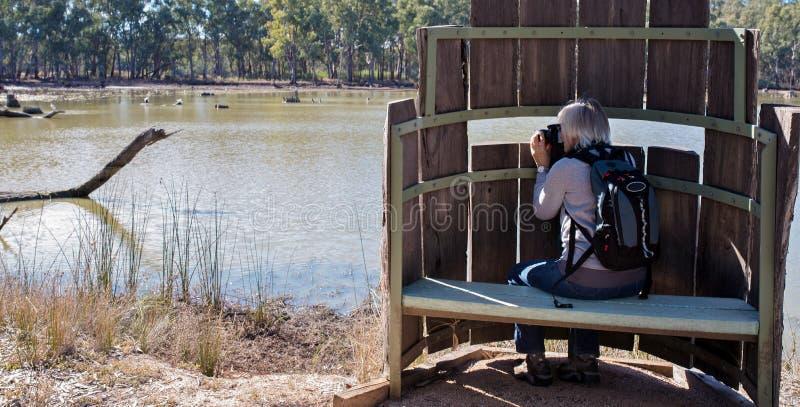 Γυναίκα που παίρνει τις φωτογραφίες από τη δορά πουλιών στοκ φωτογραφία