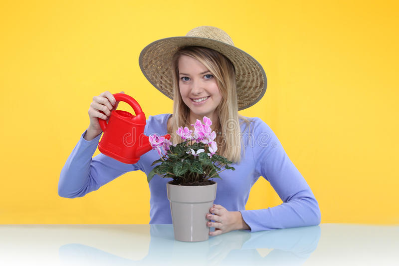 Γυναίκα που ποτίζει ένα φυτό στοκ φωτογραφίες