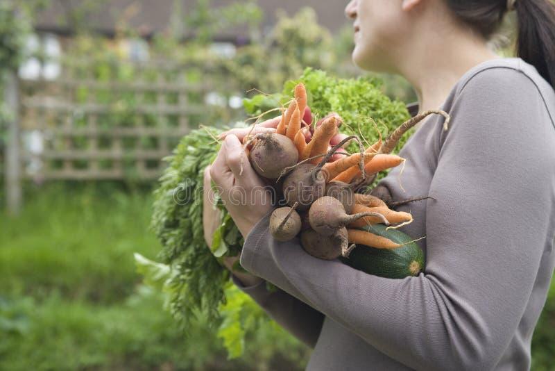 Γυναίκα που φέρνει τα διάφορα συγκομισμένα λαχανικά στοκ εικόνες