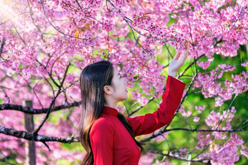 Γυναίκα που φορά τον πολιτισμό του Βιετνάμ παραδοσιακό στο πάρκο ανθών κερασιών στοκ εικόνες
