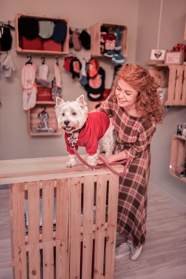 Γυναίκα που φορά το τακτοποιημένο φόρεμα που εξετάζει το κατοικίδιο ζώο της που φορά τον κόκκινο ιματισμό στοκ φωτογραφία
