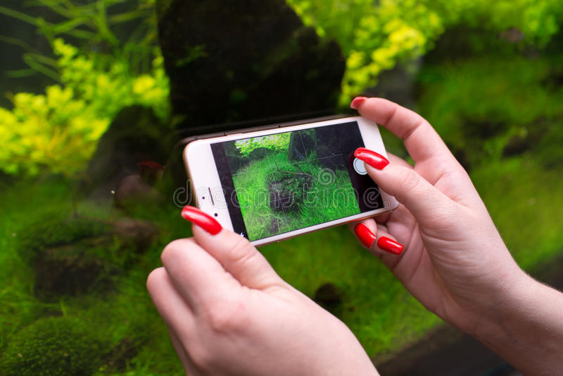 Γυναίκα που χρησιμοποιεί ένα έξυπνο τηλέφωνο για να πάρει μια φωτογραφία του ενυδρείου στοκ εικόνες με δικαίωμα ελεύθερης χρήσης