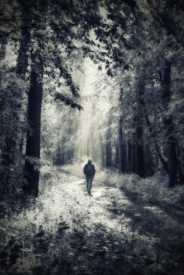 Γυναίκα στο δάσος περπατάει στο δάσος στοκ φωτογραφίες με δικαίωμα ελεύθερης χρήσης