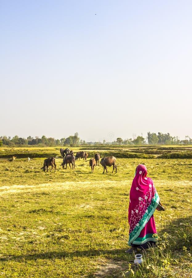 Γυναίκα στο κόκκινο saree στοκ φωτογραφίες