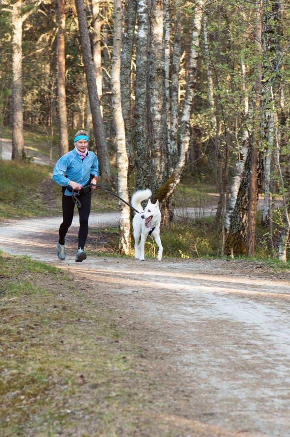 γυναίκα τρεξίματος πάρκων σκυλιών στοκ φωτογραφίες