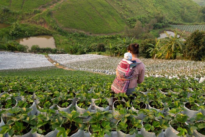 Γυναίκα των φυλών Χιλ με μωρό στην πλάτη της με οργανικά φρέσκα χωράφια φράουλας στοκ φωτογραφία με δικαίωμα ελεύθερης χρήσης