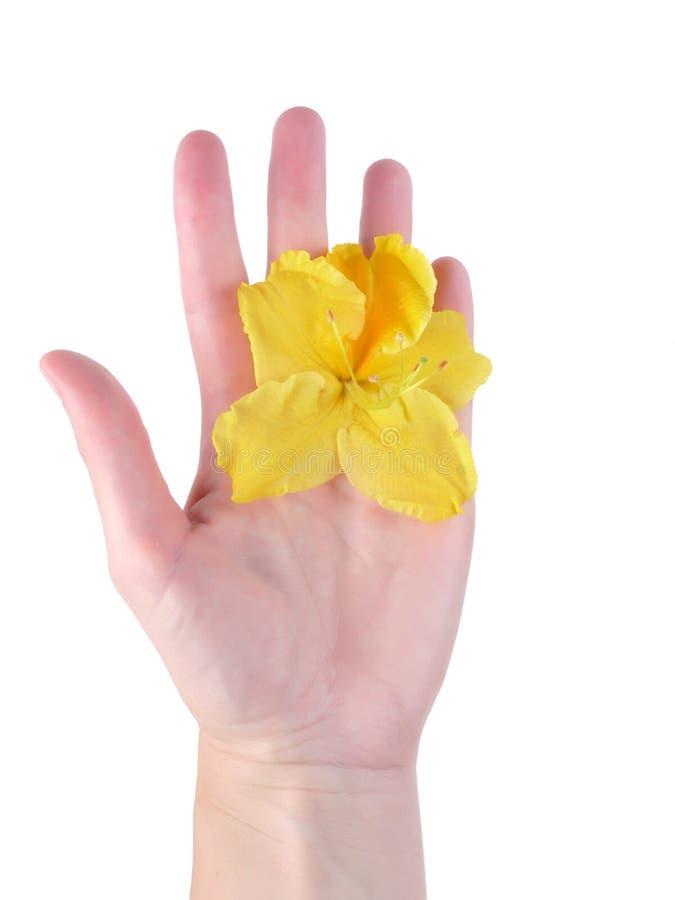 γυναίκα χεριών λουλου&del στοκ εικόνα