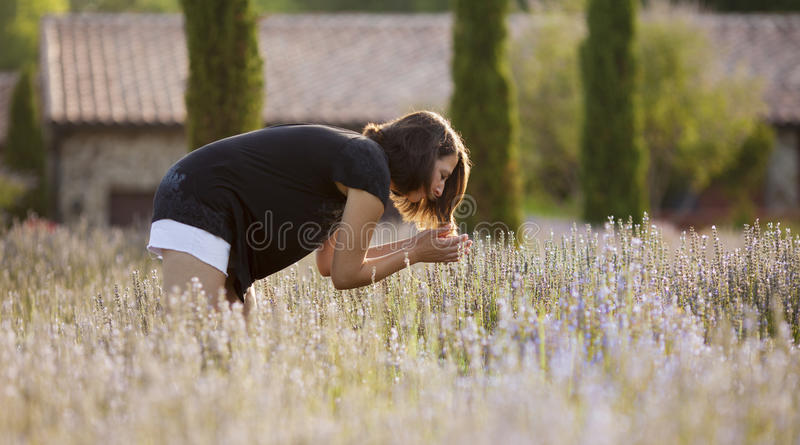 Γυναίκα lavender στον τομέα στοκ εικόνα