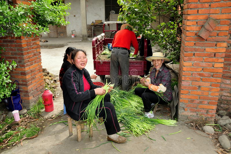 Pengzhou, Κίνα: Γυναίκες που συσσωρεύουν τα πράσινα σκόρδου στοκ φωτογραφίες με δικαίωμα ελεύθερης χρήσης