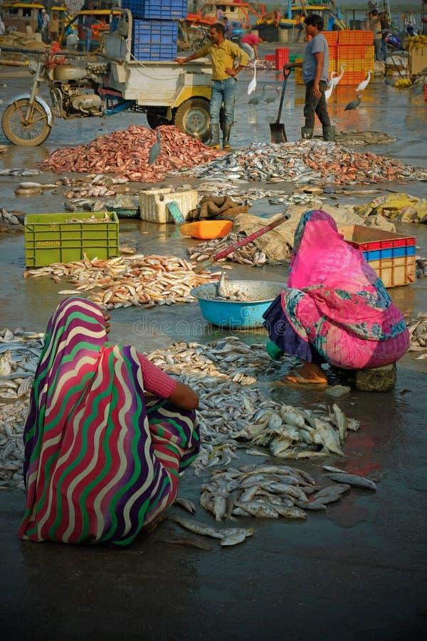 Γυναίκες που ταξινομούν τα φρέσκα ψάρια για την πώληση σε μια αποβάθρα Gujarati στοκ εικόνες