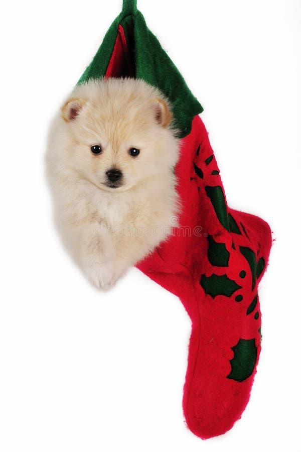 γυναικεία κάλτσα κουταβιών Χριστουγέννων στοκ εικόνα