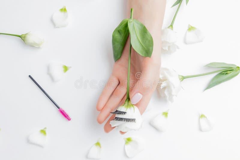 Γυναικεία κύρια επέκταση βλεφαρίδας στο φόντο των λευκών λουλουδιών με ροζ πινέλο, επάνω όψη Έννοια της ομορφιάς στοκ εικόνες