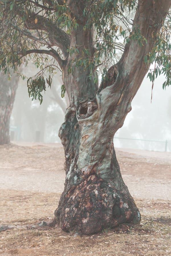 Γόμμα χιονιού στα χιονώδη βουνά Αυστραλία ομίχλης στοκ εικόνες