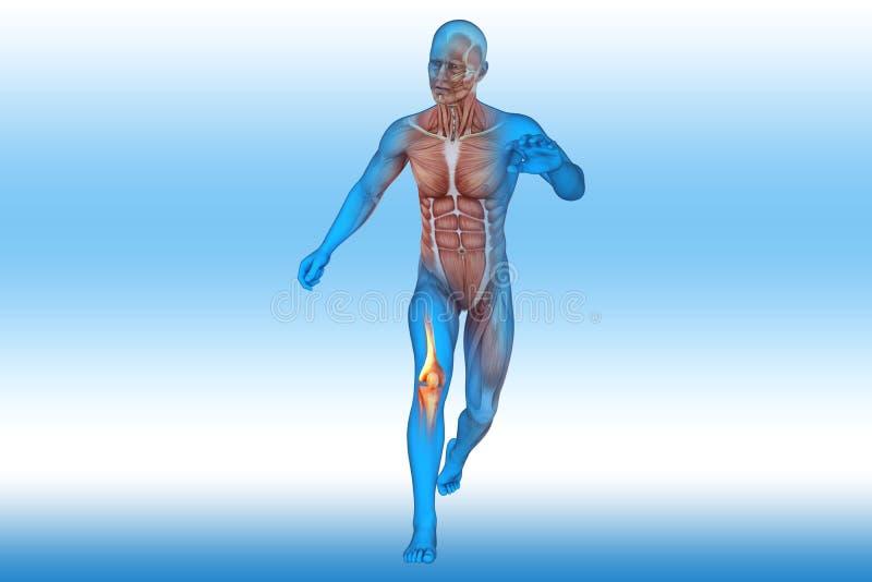 Γόνατο, ανατομία, κόκκαλα διανυσματική απεικόνιση
