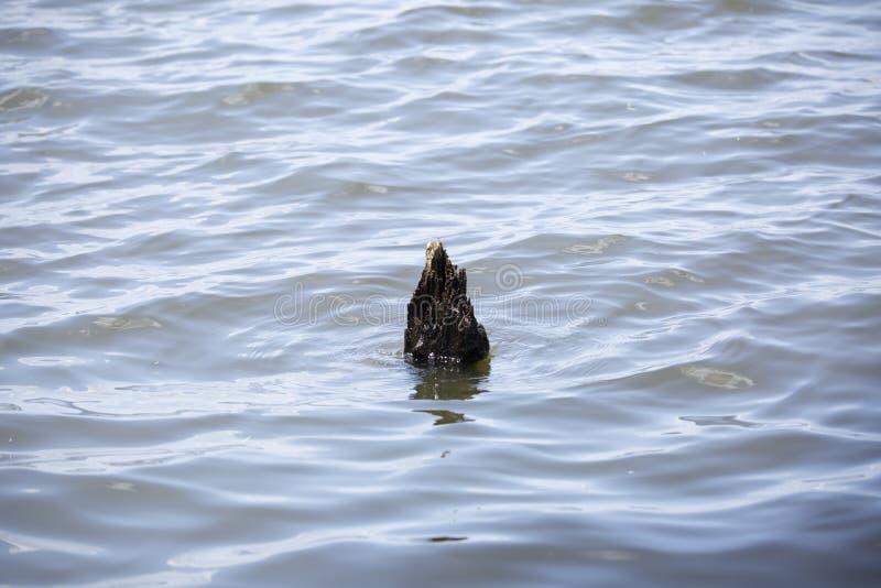Γόνατο κυπαρισσιών στην ευμετάβλητη λίμνη στοκ εικόνα με δικαίωμα ελεύθερης χρήσης
